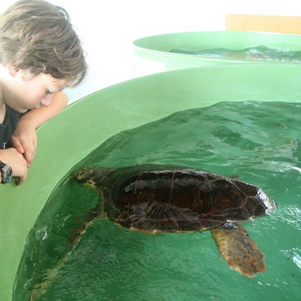 écovolontariat tortue marine turquie